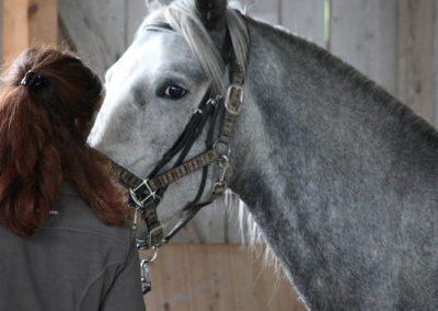 Abschnauben-Slides-hoeher-Ausbildung-Anreiten-junger-Pferde-1000x500